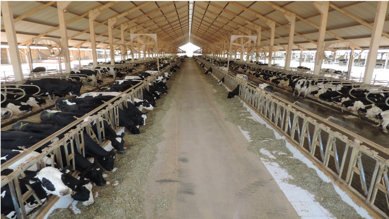 curso confinamento de bovinos de corte