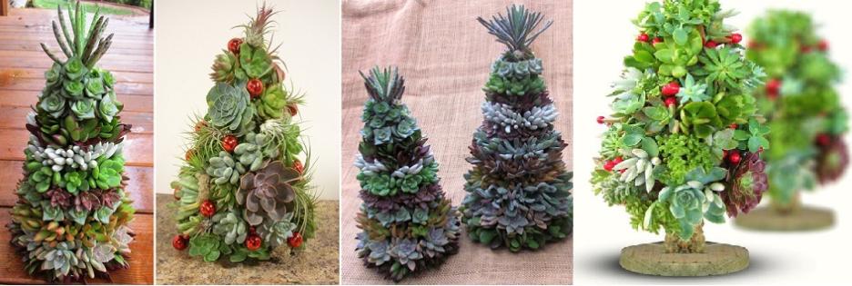 Árvore de Natal Com Plantas Suculentas