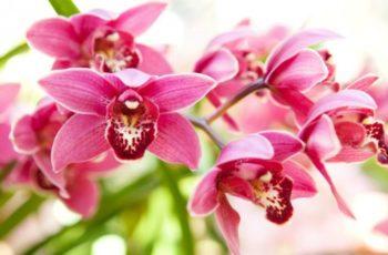 → Como Fazer Orquídea Florir >> De uma Forma Fácil e Simples <<