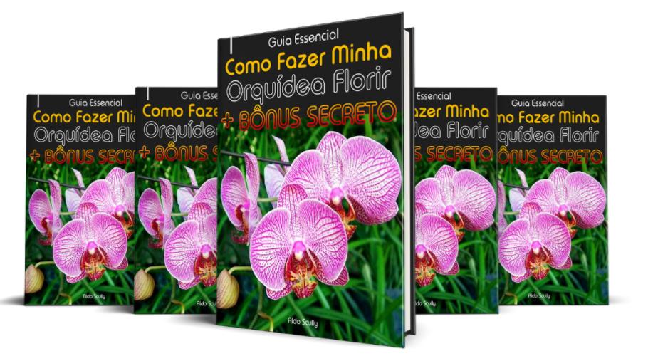 como fazer orquídea florir