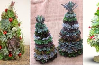 → Árvore de Natal Com Plantas Suculentas [Noite Natalina]
